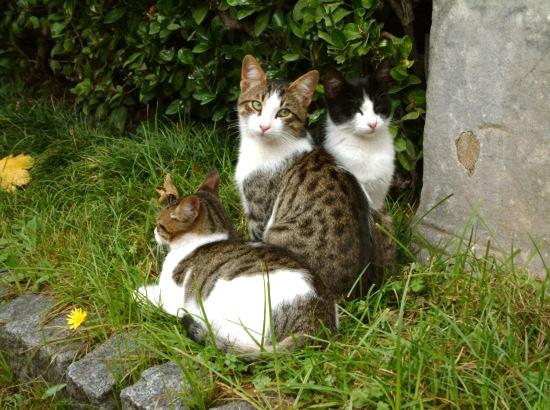 Cats_50.jpg