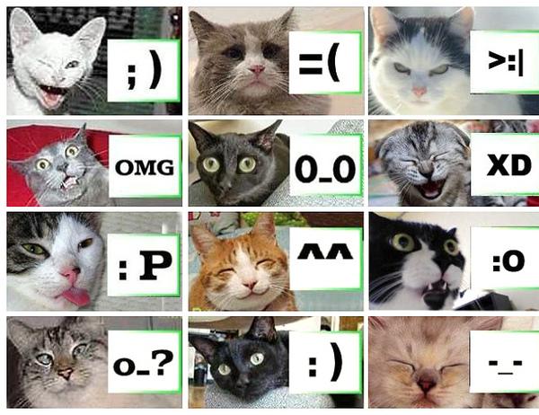 Cats_49.jpg