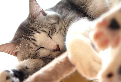 Cats_p5.jpg