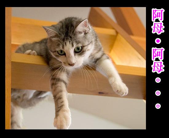 cats_v21.jpg