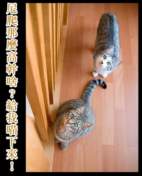 cats_v21a.jpg