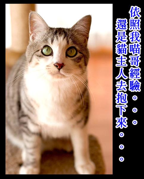 cats_v22.jpg