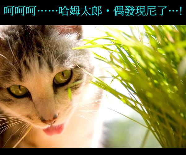 cats_b20.jpg