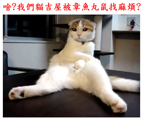 cats_b10.jpg