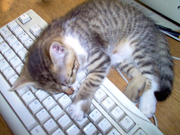 cats_v31.jpg