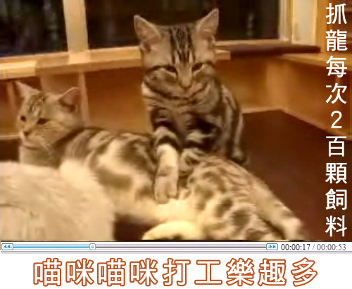 cats_b13.jpg