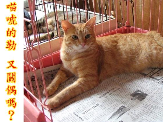 cats_v103.jpg