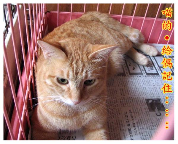 cats_v105.jpg