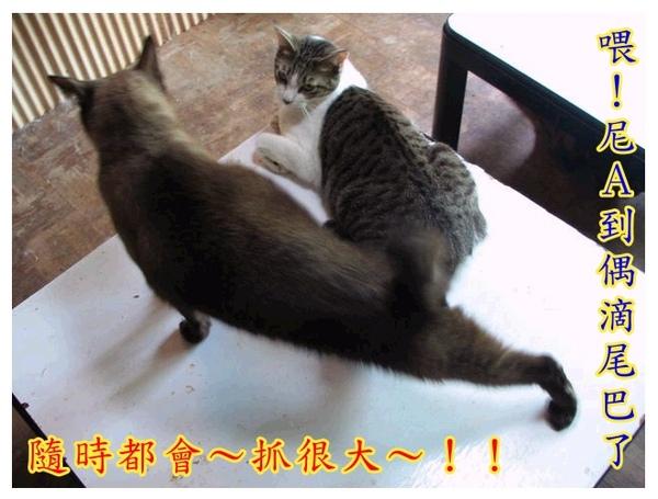 cats_v107.jpg