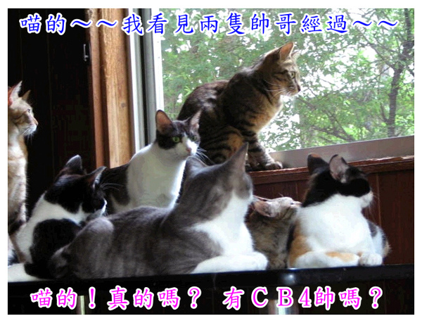 cats_v113.jpg