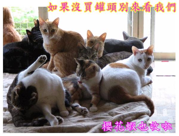 cats_v111.jpg
