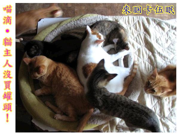 cats_v112.jpg