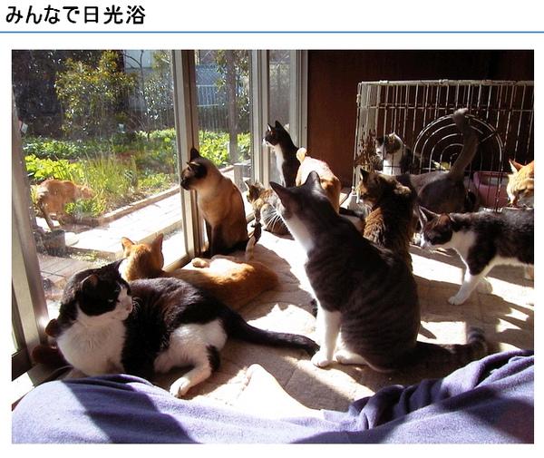 cats_v99.jpg
