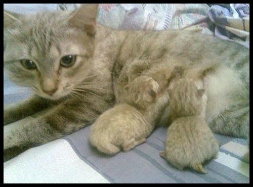 cats_v51.jpg