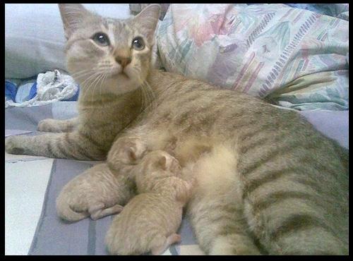 cats_v52.jpg
