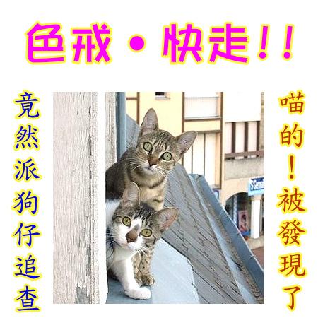 cats_v91.jpg