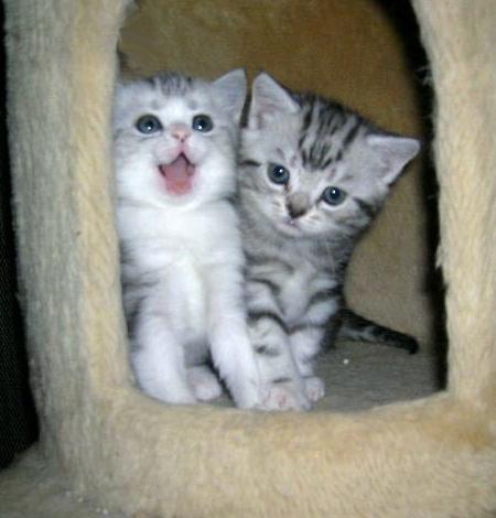 cats_v83.jpg