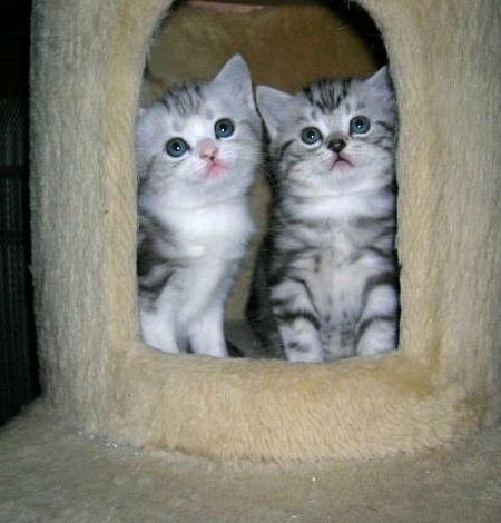 cats_v84.jpg