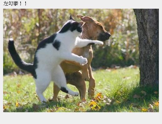 cats_v49.jpg