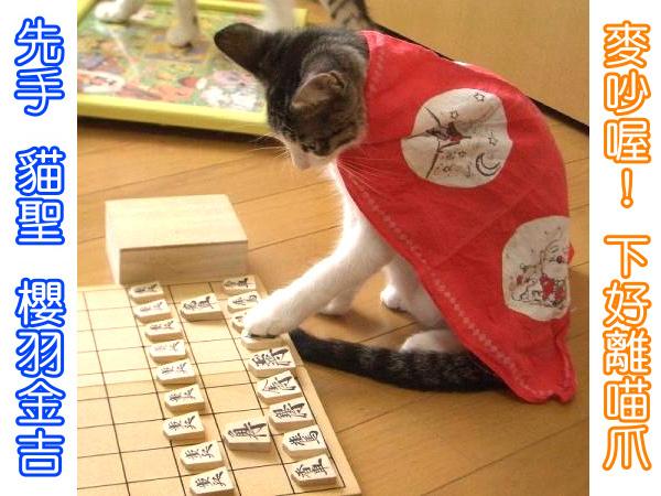 cats_v77.jpg