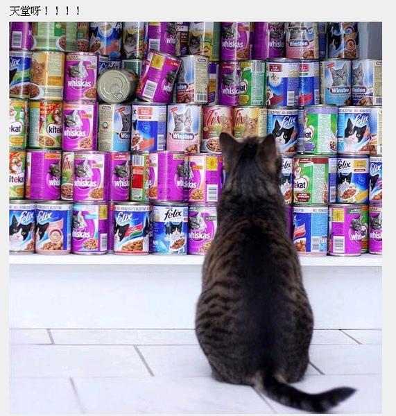 cats_v47.jpg