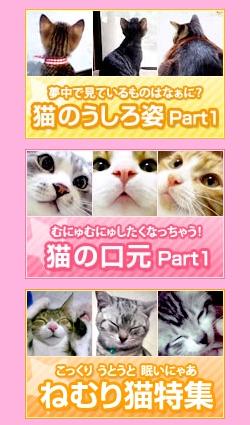 cattoe.jpg