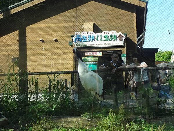 2012.7.15 旭山動物園
