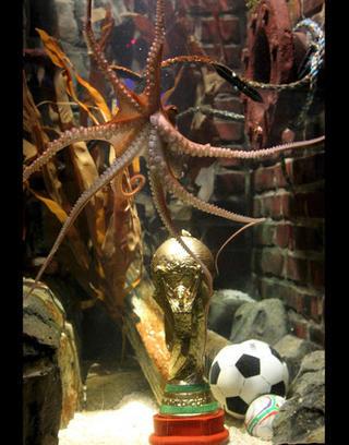 WC2010-Campeones-章魚保羅大帝最出風頭.jpg