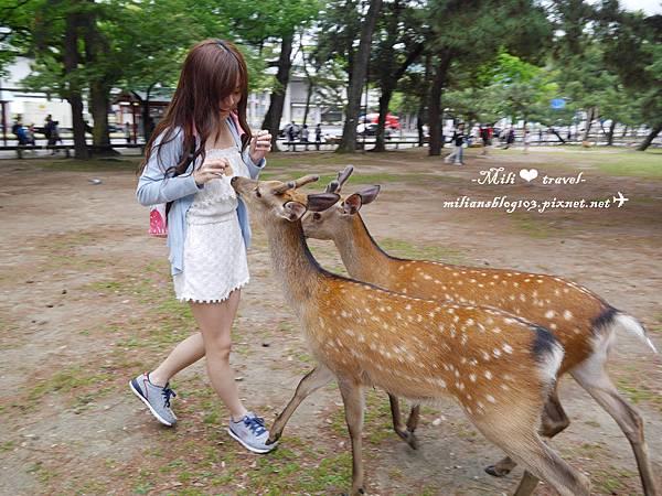 奈良必去 ✈ 世界遺產興福寺。奈良公園。享受被鹿圍攻的刺激。千萬別穿平口餵鹿阿~~