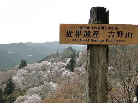 京都吉野山之櫻