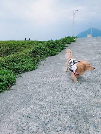 20190313_潮境公園 (4).jpg