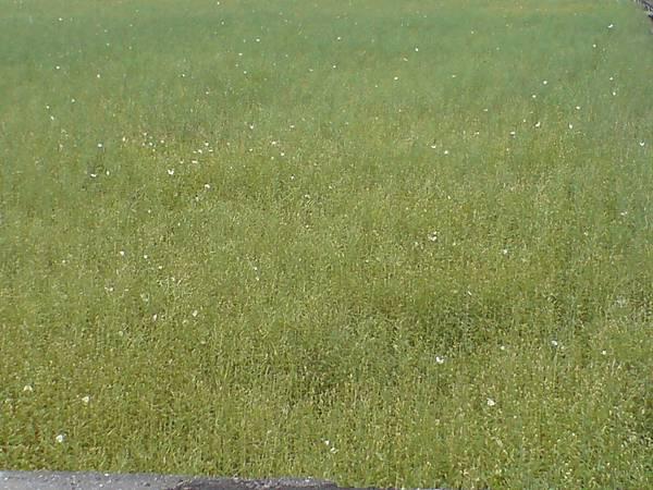 成群的白蝴蝶