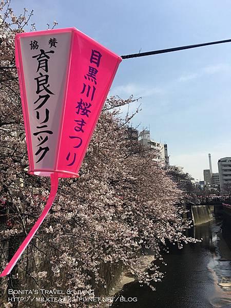 中目黑賞櫻16.jpg