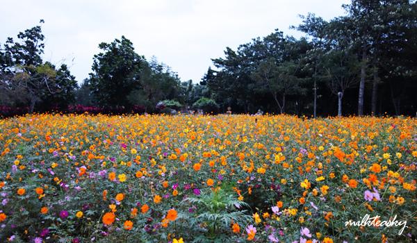 2013 花蓮 知卡宣森林公園 (1)
