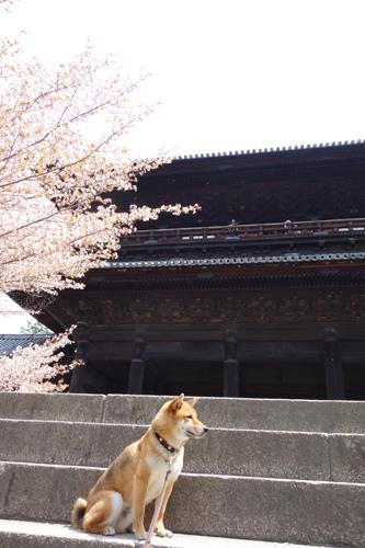 Kyoto2-08