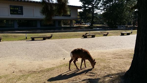 Nara (4)