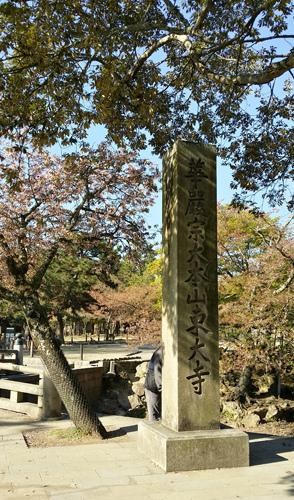 Nara (6)