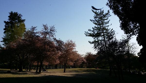 Nara (11)