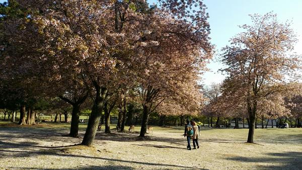 Nara (12)