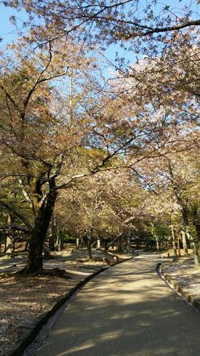 Nara (15)