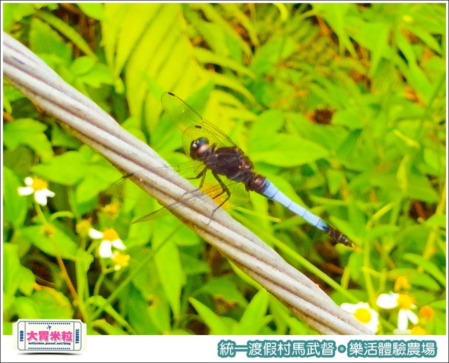 統一渡假村馬武督-樂活體驗農場@大胃米粒0047.jpg
