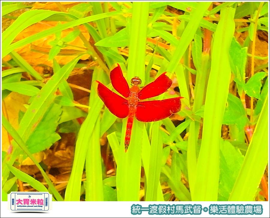 統一渡假村馬武督-樂活體驗農場@大胃米粒0046.jpg
