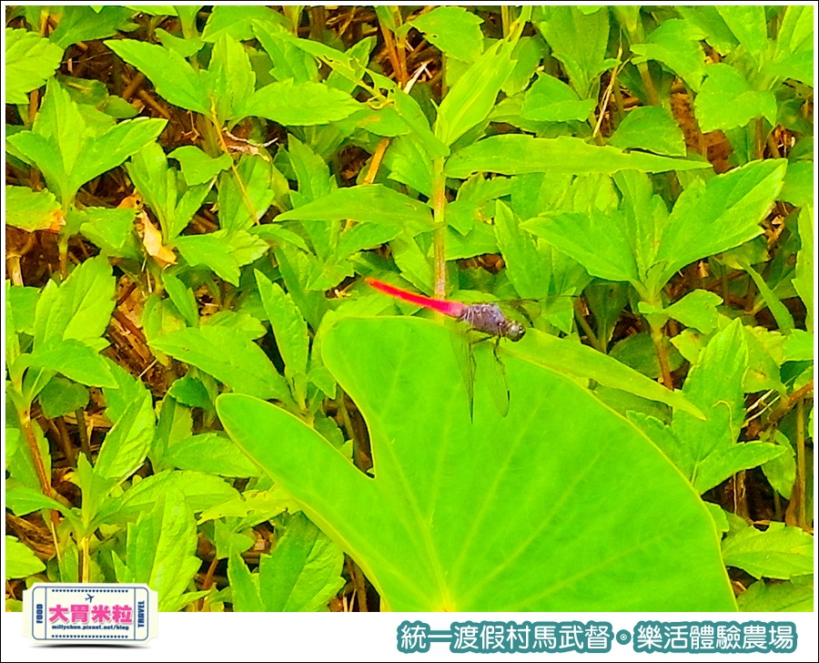 統一渡假村馬武督-樂活體驗農場@大胃米粒0050.jpg