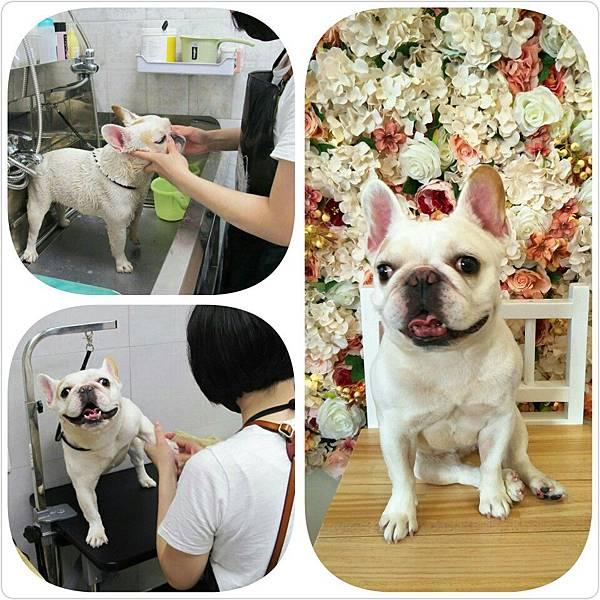 台南永康寵物美容推薦沐星寵物澡堂貓貓狗狗皮毛護理/寵物洗澡