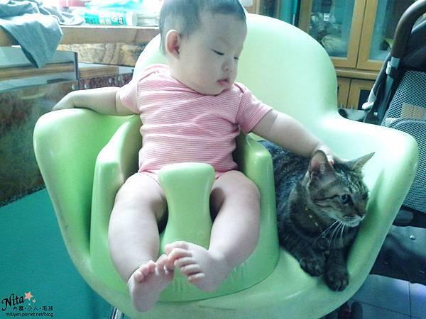 懷孕不能養貓會流產畸形弓漿蟲寵物孕婦胎兒小知識