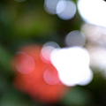 grd3_0813-5.jpg