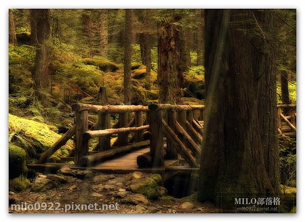 森林光影飄渺  動態桌布milo0922.pixnet.net_13h58m08s
