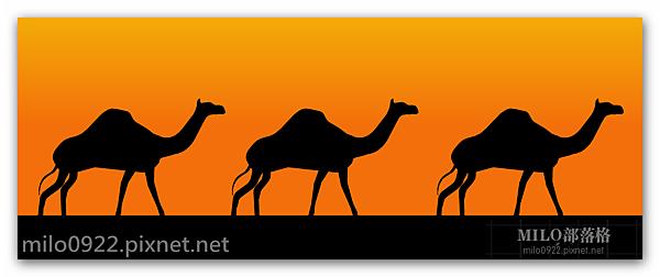 漫步的駱駝camels  milo0922.pixnet.net__023_