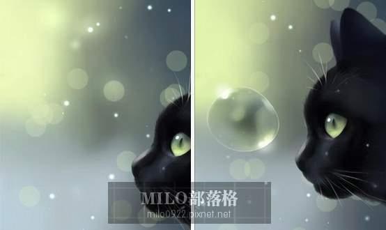 Curious Cat  milo0922.pixnet