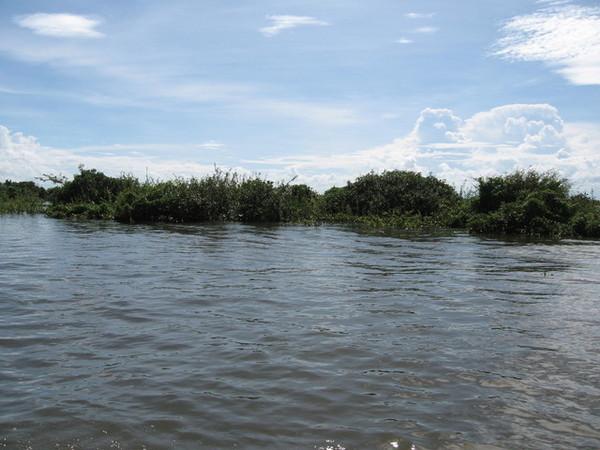 雨季時被水淹沒的樹林